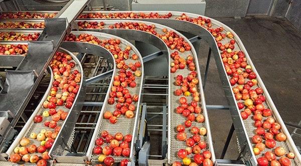 Fabriksautomatisering sortera äpplen